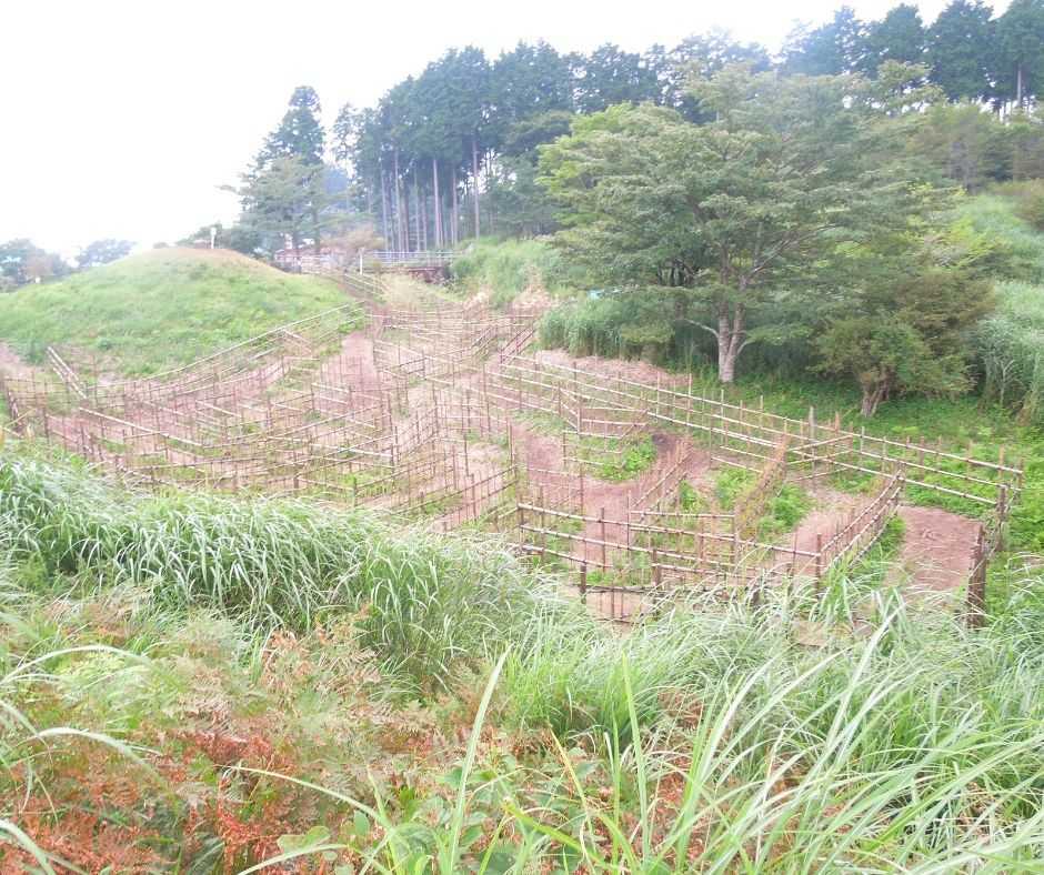 竹の巨大迷路 全体