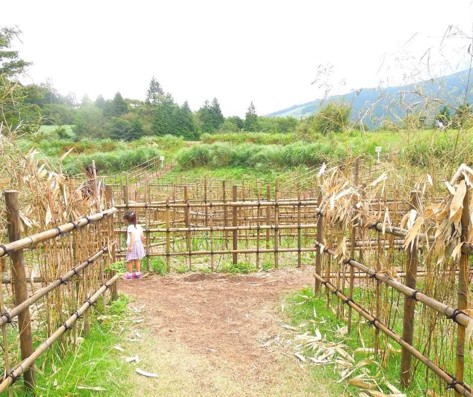 竹の巨大迷路